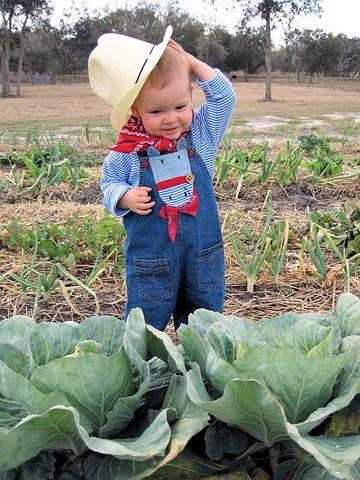 Emilia-Romagna pacchetto giovani per l'agricoltura